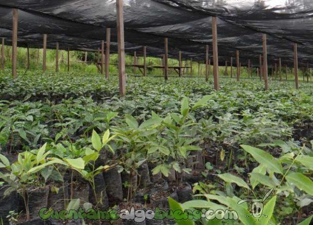 20161016-1-cafe-comercio-justo-honduras-06
