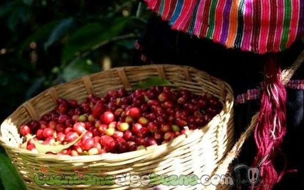 Acceso a la tierra y a los recursos productivos a través de la organización comunitaria en Chiapas (México)