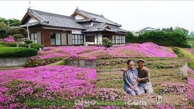 Planta 7.000 flores en su jardín para sorprender a su esposa ciega