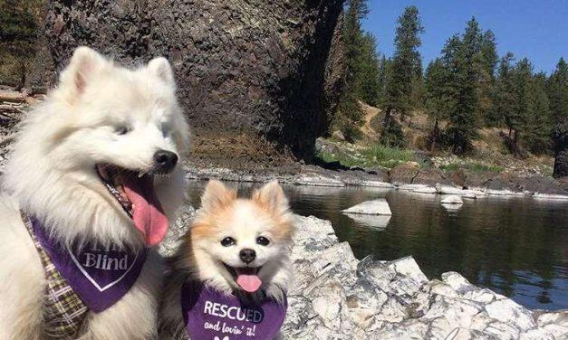 La tierna historia del perro ciego Hoshi y su lazarillo Zen