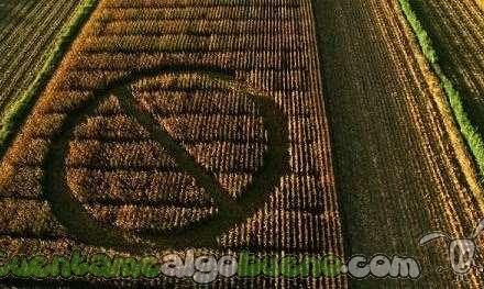 Alemania prohíbe por ley los cultivos transgénicos