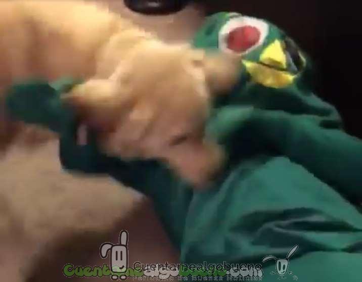 Sorprende a su perro disfrazándose de su juguete favorito