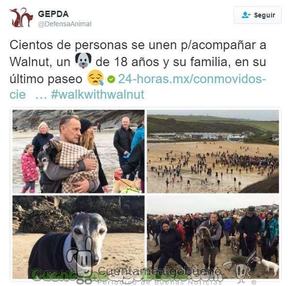 201611228-1-2-perro-paseo-playa