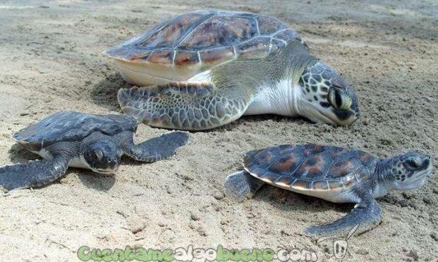 Rescatan huevos de tortuga en peligro de extinción