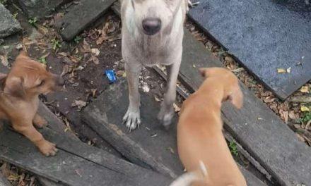 Una hambrienta perra de Bankok elige alimentar a sus cachorros en lugar de comerse lo que le dan