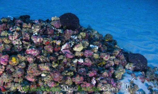 Increíble arrecife en el Amazonas