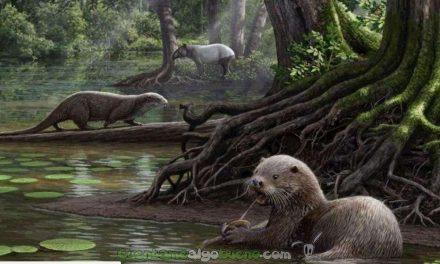 Restos fósiles de una nutria prehistórica gigante