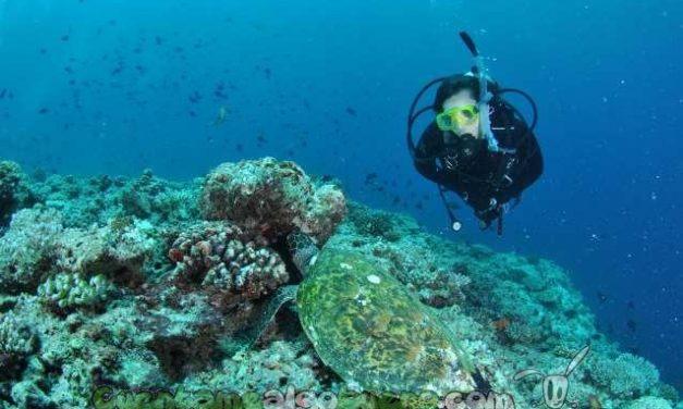 Futuro parque submarino en Roquetas