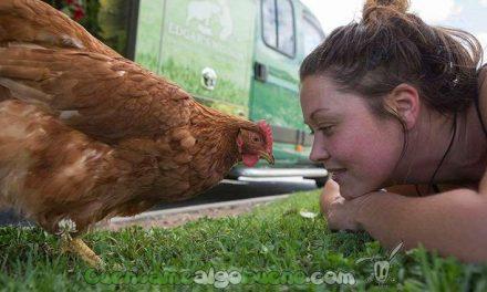 El granjero que decidió liberar a sus más de 1000 gallinas ponedoras y darles una vida digna