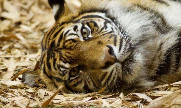 Ya no habrá más circos con animales en Madrid