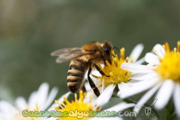 Las abejas, nuestras pequeñas grandes amigas. Fotografía de Pimthida.