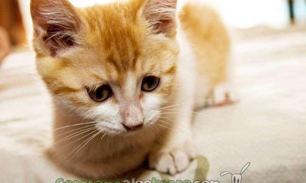 En las tiendas de animales de San Francisco sólo se podrán adquirir perros y gatos rescatados