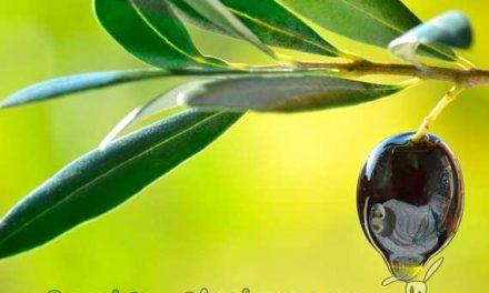 Aumenta el consumo de Productos Ecológicos en España
