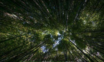 Feliz Día Internacional de Los Bosques
