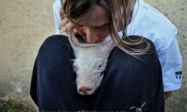 De nieto de carnicero a vegetariano fundador de una asociación ética que defiende los animales