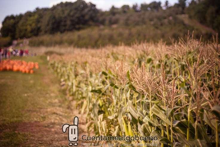 La agricultura ecológica es una solución para alimentar a la población mundial hoy y en el futuro