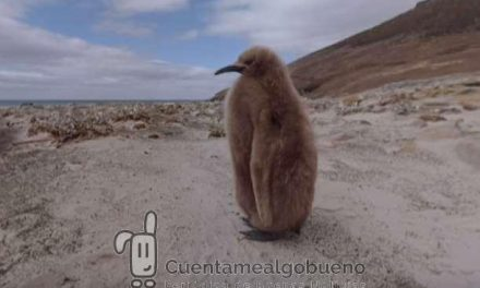 BirdLife International rueda un corto de realidad virtual para salvar a los pingüinos