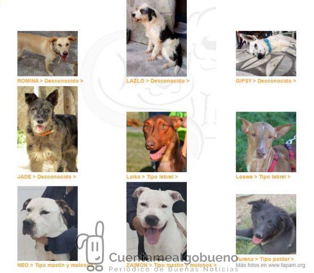 Algunas de los animales de compañía que pueden adoptarse a través de CIAAM.