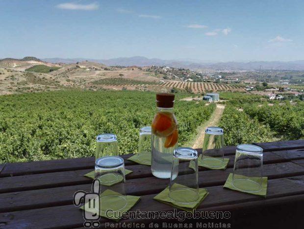 Agua con cítricos de la Huerta natural