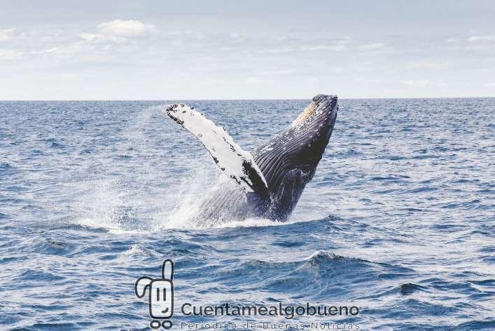 Proponen con 52.000 firmas la creación de un Santuario de Cetáceos en Canarias