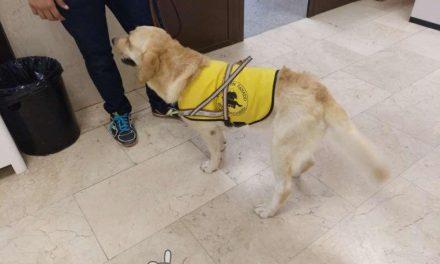 Entregan un perro de servicio a una persona con Esclerosis Múltiple