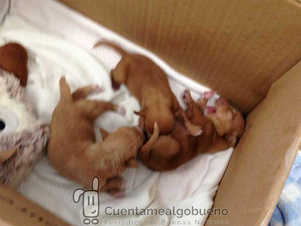 Una nueva oportunidad para cuatro cachorros abandonados for Verdecora malaga