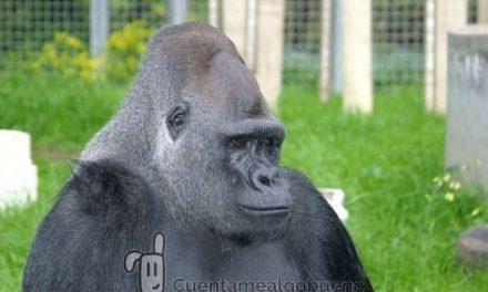 Mensaje de una Gorila al mundo