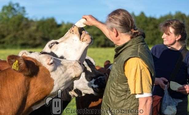 Ganadero envía a todas sus vacas a un refugio animal en lugar del matadero