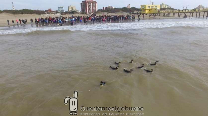 Devuelven a nueve pingüinos rescatados al mar