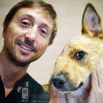 Devolviendo la calidad de vida a perros gravemente dañados
