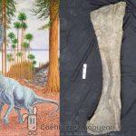 Hallado en Soria una nueva especie de dinosaurio saurópodo