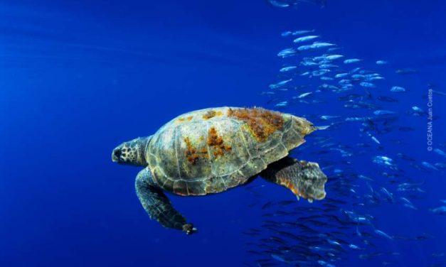 La UE propone ambiciosas medidas para lograr unos mares más limpios y seguros