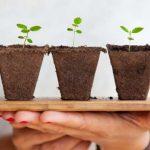 III Congreso Mundial sobre Bioestimulantes Agrícolas en Miami