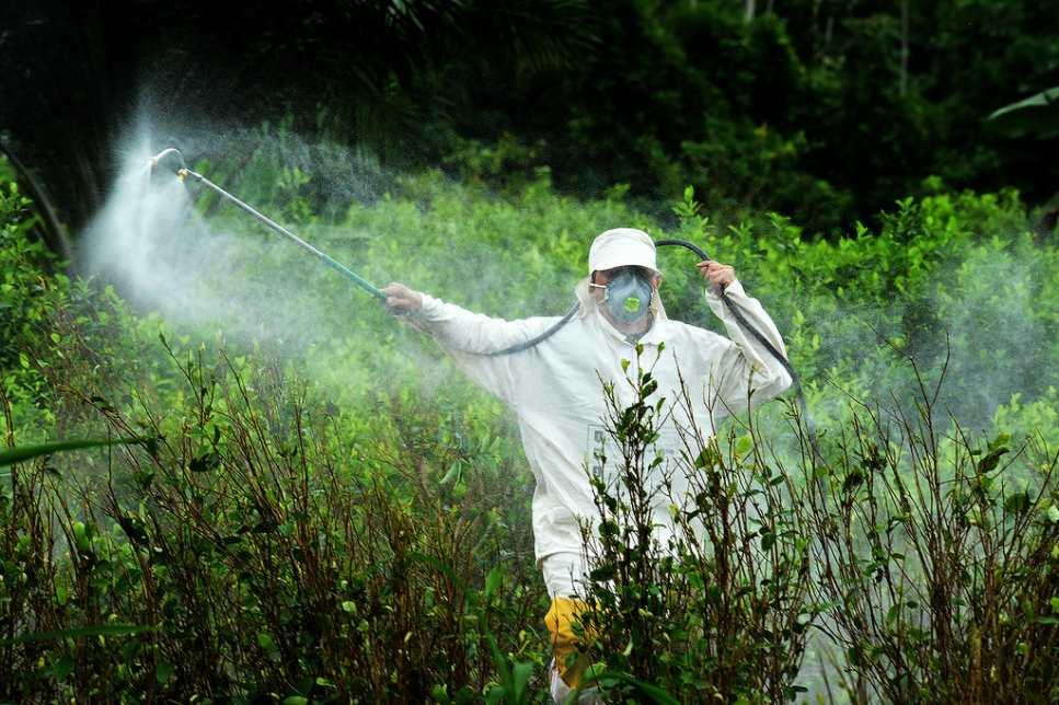El glifosfato se ha venido utilizando ampliamente en la agricultura. Es hora de pasar a medidas más ecológicas. Foto cortesía de Policía Nacional de los colombianos