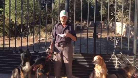 Anciano enfermo de cáncer pide una familia para sus perros antes de morir