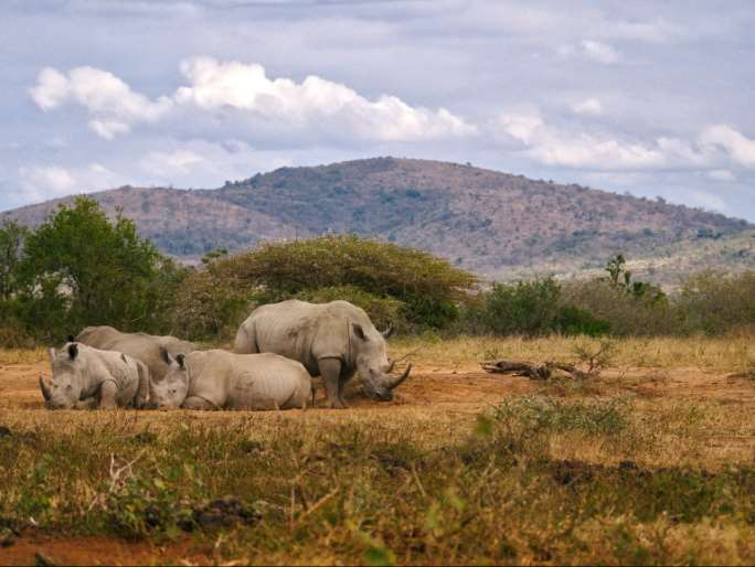 Desciende la caza furtiva de rinocerontes en Sudáfrica