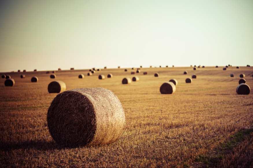 Estudian la forma de crear baterías más sostenibles usando paja de trigo