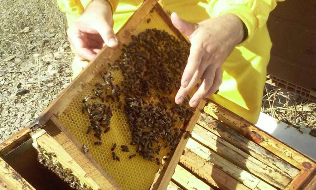 Bee Garden difunde los beneficios de las mieles artesanales en su blog
