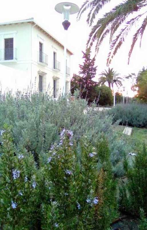 Plantas de romero en el exterior del Aula Bee Garden