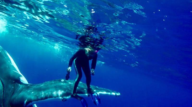 La ballena jorobada empuja a la bióloga a la superficie