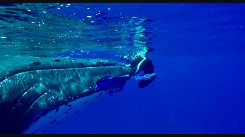 La ballena muestra insistencia ante la llegada del tiburón: quiere que la humana suba a la superficie y se ponga a salvo