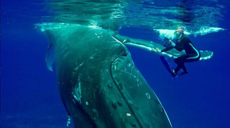 Nan Daeschler estudiando a las ballenas jorobadas cuando una mostró un comportamiento diferente