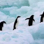 Greenpeace inicia una expedición histórica por la creación del Santuario Antártico