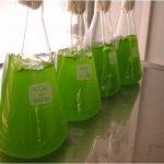 Crean un sistema de depuración de aguas residuales con microalgas más efectivo y económico