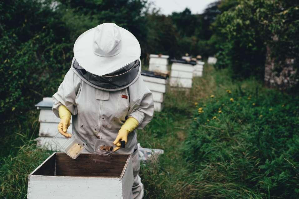 El Parlamento Europeo busca con esta medida defender a los apicultores y a los propios consumidores