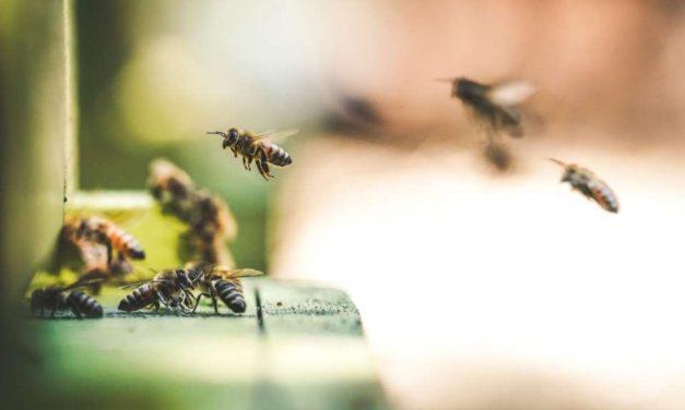 El Parlamento Europeo aprueba la iniciativa para el etiquetado claro de la miel y la protección de las abejas