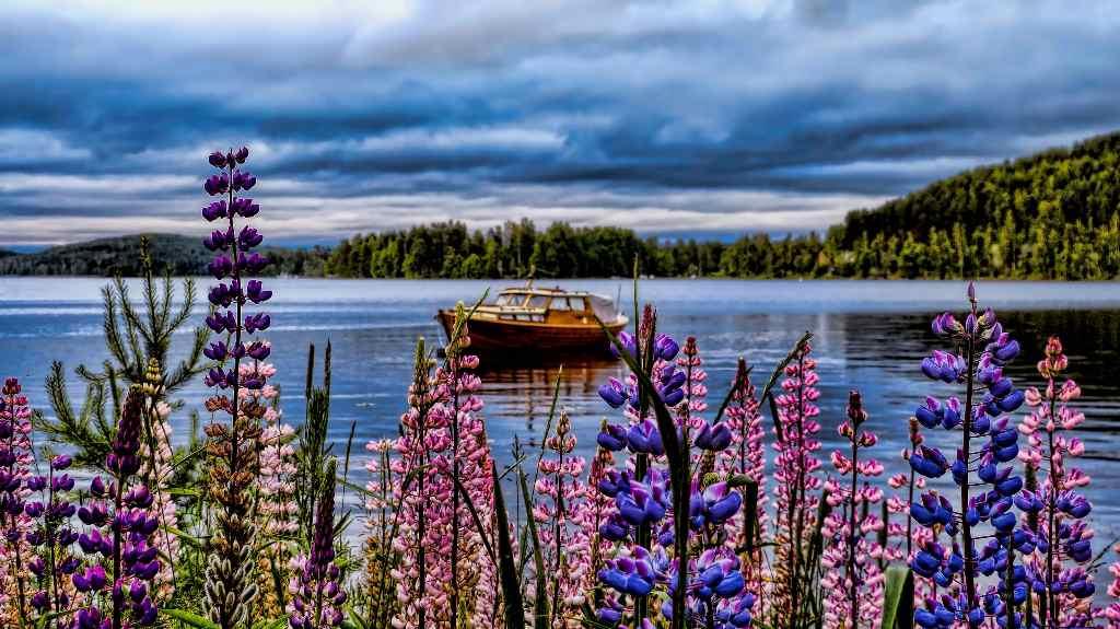 Finlandia es el país cuyos ciudadanos, ya sean nativos o inmigrantes, son los más felices del mundo, según el estudio de Gallup, Inc. Foto cortesía de Mariano Mantel
