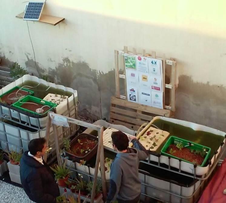 Bee Garden acaba de abrir el segundo módulo del Sistema de Acuaponía en su Aula Apícola y Medioambiental