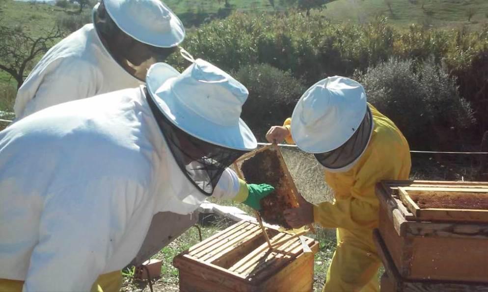 Continúa la semana sin pesticidas para promover alternativas saludables