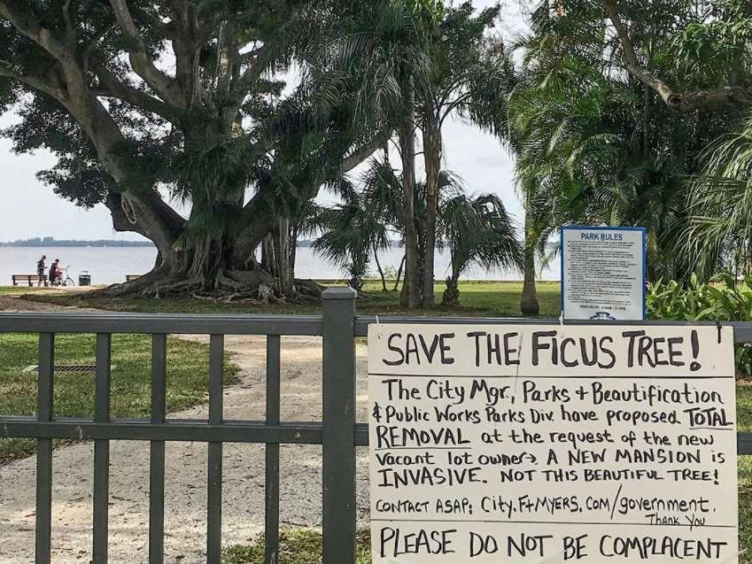 """Cartel de """"salvemos al ficus"""" situado en la entrada al parque"""